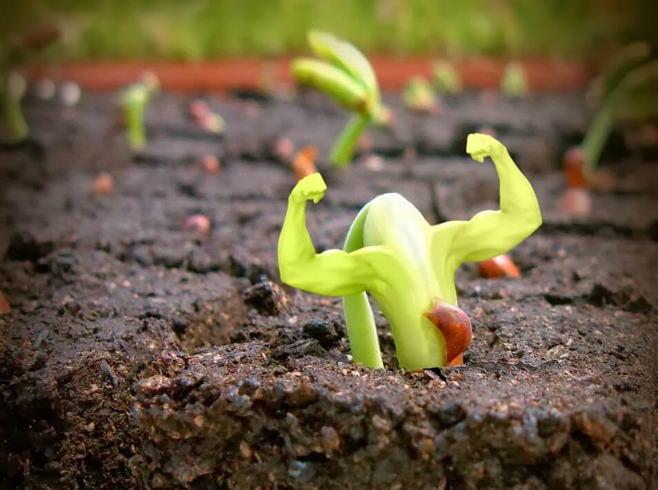 desiderio LE LEGGI DEL DESIDERIO crescita personale sviluppo personale1