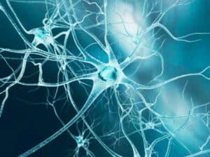 circuiti mentali killer LE EMOZIONI KILLER DELLA TUA SALUTE circuiti mentali 300x224