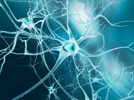 imprinting IMPRINTING EMOZIONALE – L'ORIGINE DELLE TUE PASSIONI circuiti mentali